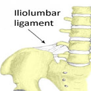 iliolumbar ligament - photo #1